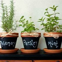 Rosemary dream meaning
